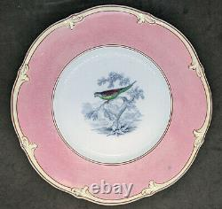 Early 1800's Worcester / Caughley Porcelain Dessert Set Birds Hand Painted